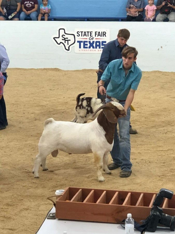 """Goating for the win \\ Showing off his prized goat, senior Colton Fisher puts his goat on display at the State Fair Boer Buck competition. Fisher has a total of three wins at this very livestock show. He is well known in the Boer Buck world. """"It feels great to win for a third time against such tough competition,"""" Fisher said."""